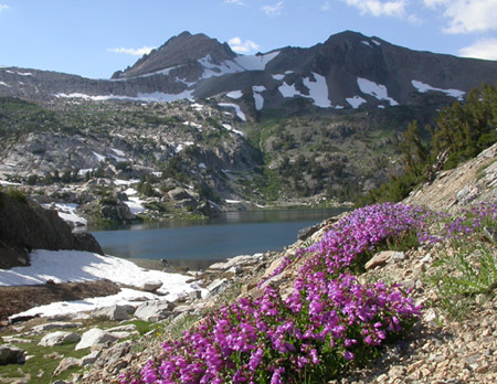 Saddlebag-lake-flowers.jpg